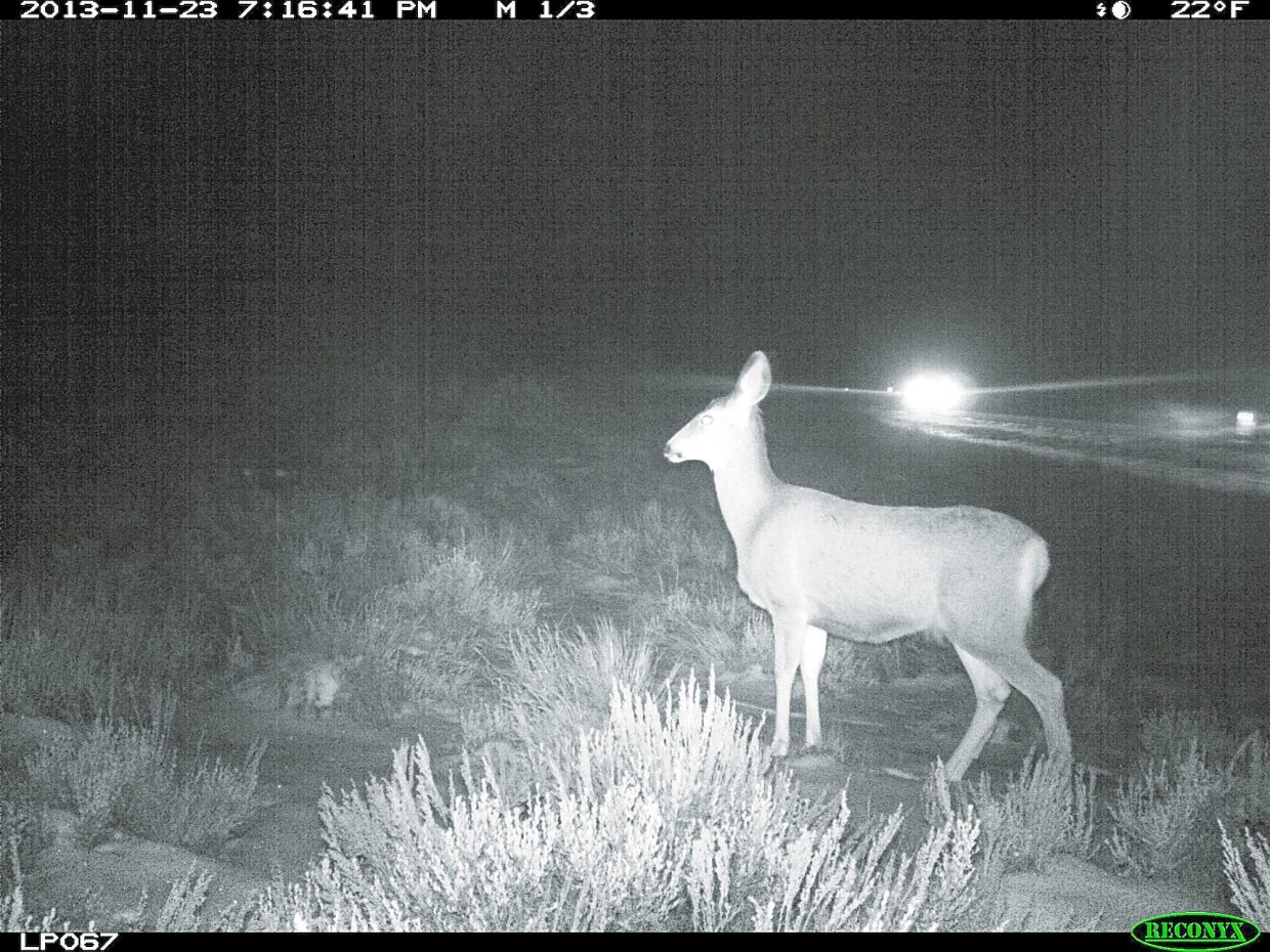 A Colorado Parks and Wildlife camera captured this mule deer near the part of Highway 9 soon to see construction of safety and wildlife protection around 7:15 p.m. on Nov. 23
