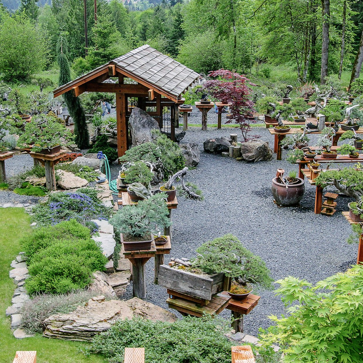 This is the Bonsai Mirai garden owned by Ryan and Chelsea Neil, Glenwood Springs High graduates who have become leaders in the American bonsai community.
