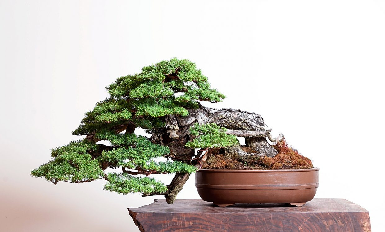 One of Ryan Neil's bonsai creations.