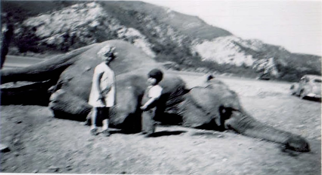 Geri Jewell's little sister and brother, Shirley and Joe Simms, pose with the body of Bertha the elephant after the creature was euthanized.
