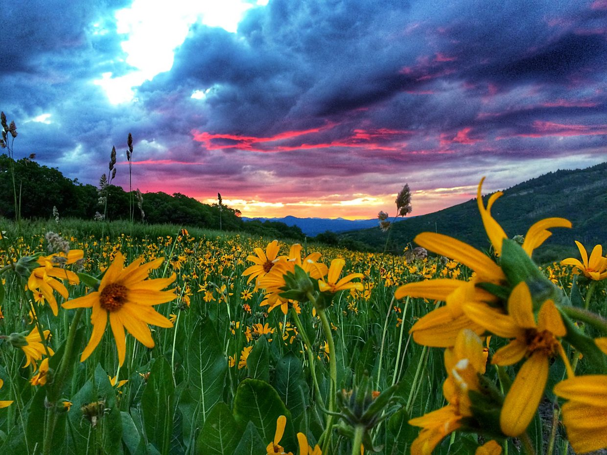 A beautiful sunrise at the base of Mount Sopris this summer.