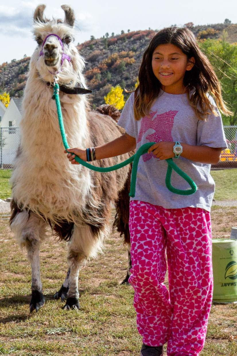 Clara Lange (10) leading one of Linda Hayes's llamas through the obstacle course that was set up behind Sopris Elementary School.