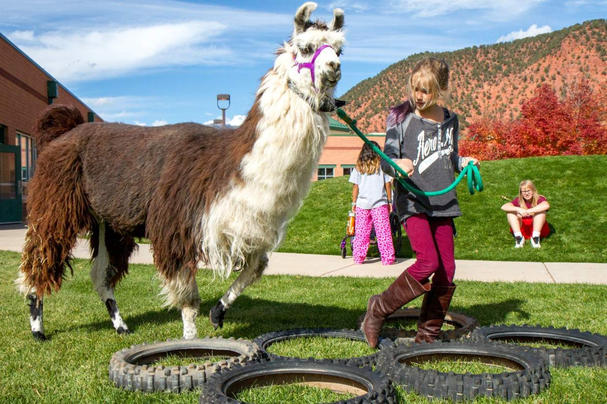 Frances Bell (10) leading her llama through the tires as part of the obstacle course on Wednesday afternooon during the after school enrichment program at Sopris Elementary School.