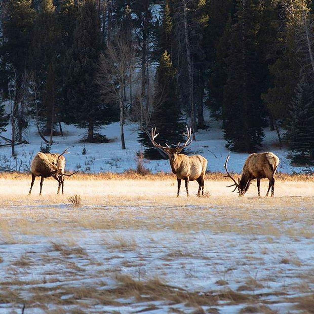 Private land hunts available near Meeker | PostIndependent com