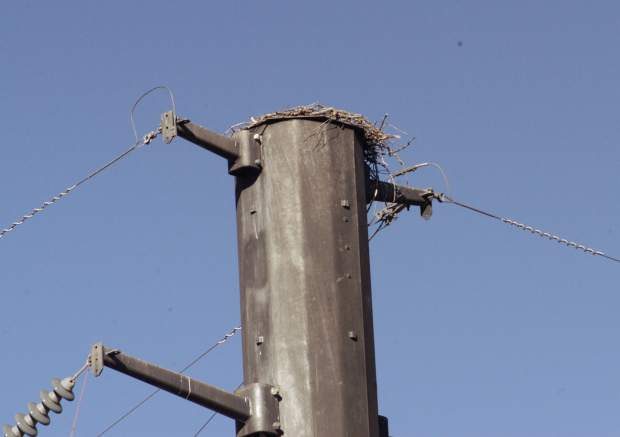 An osprey nest sits precariously on top of a transformer pole at the Xcel Energy substation in Carbondale. CRMS students are working to locate nesting poles on the nearby campus to try to lure the birds away from the dangerous location next spring.