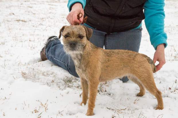 Gucci and Laura are set to represent the border terrier breed at the American Kennel Club National Championship in Orlando, Florida.