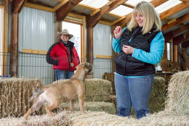 Laura Wright-Smith works with Gucci during a training session at the training facility owned by Mary Porter (background), where terriers use their natural instincts to hunt and find rats.