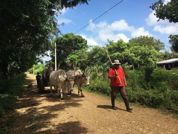 The Chacos family got a tour of El Tambo, Nicaragua, with one of the farmers and his oxen.