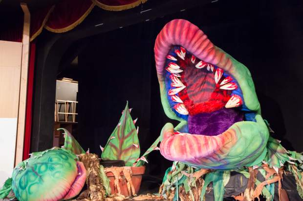 """Audrey II becomes a dominant character in more ways than one. She's consumed people whole, and during the finale she occupies a quarter of the Vaudeville's stage. At this phase, she can stretch to as much as 9.5 feet tall, and her nose will at moments extend over the audience. """"The plants are fun. They make you laugh. You go away talking about that,"""" said Goss, who has been part of five previous productions of the show. But the story is really about Seymour and Audrey, he said.  """"This show in general has the possibility of having a lot of heart,"""" Goss said. It's a great story, great, great characters. My two leads sound phenomenal.""""  Really, the story is more about the relationship between Seymour and Audrey. Weight: 28.5 pounds"""