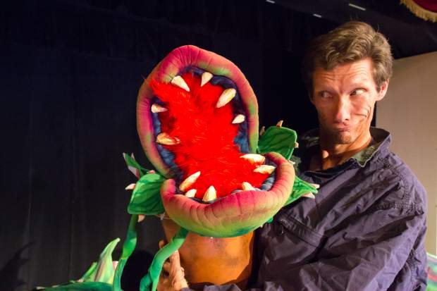 Seymour continues to cut his fingers, and so his fingers are now bandaged. The actor slips into a jacket with a false arm, and so his right arm brings Audrey II to life. Weight: 1.5 pounds