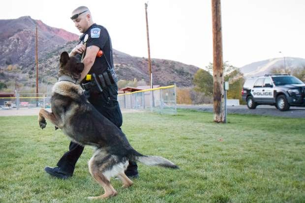 Glenwood Springs Police K9 handler Blake Gobbo and K9 Zeus get some obedience work done near the police department Wednesday evening before working the night shift.