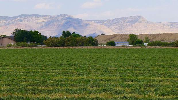 An irrigated field under the Government Highline Canal in the Grand Valley near Grand Junction. Ten irrigators in the Grand Valley were paid to fallow fields in 2017 by the Grand Valley Water Users Association, as part of a pilot program to deal with a future drought that was presented to the Colorado River District board on Tuesday in Glenwood Springs.