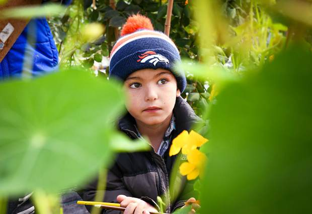 Sopris Elementary School student Timmie Lucas studies and draws the edible flowers during his farm tour with his first-grade class at Osage Gardens near New Castle on Wednesday morning.