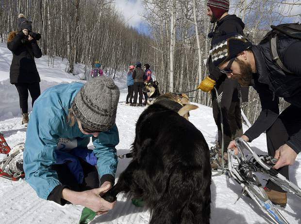 A competitor puts snow boots on her dog before the start of the Sunlight Mountain Snowshoe Shuffle Sunday.