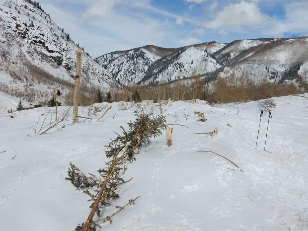 This March 10 photo, looking toward the north, shows the general vicinity of the Conundrum Trailhead and parking area. It's buried under several feet of compacted snow. The slide wiped out the trees that surrounded the lot.