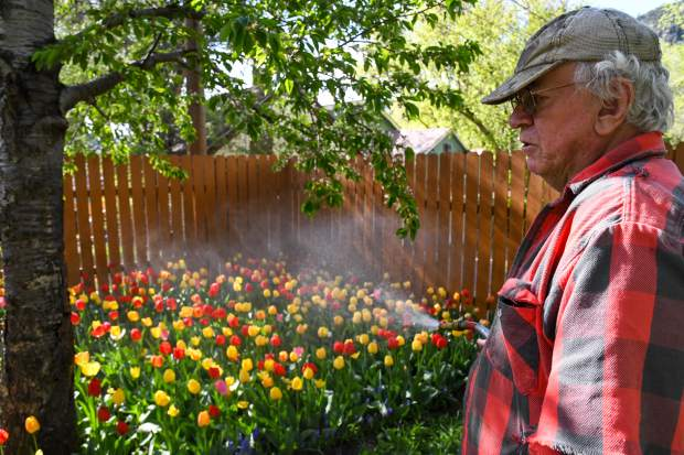 Hurst waters his favorite tulip bed, located in the backyard of his grandmother's house in downtown Glenwood Springs.
