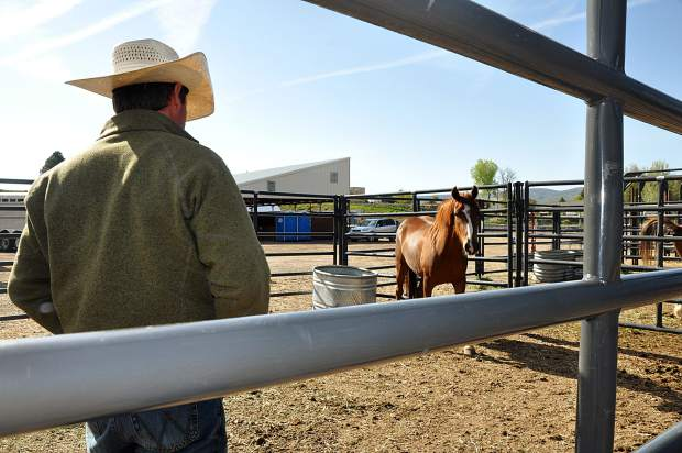 Trainer Cody Rhyne checks out what became his mare at the Meeker Fair Grounds during Day One of the Meeker Mustang Makeover.