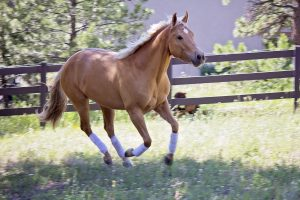 Horse success story prompts family to start CBD business for humans and animals
