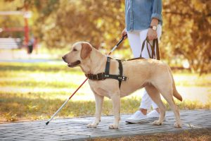 Garfield County Public Health clarifies rules on service and emotional support animals