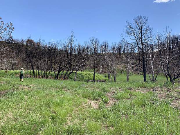 A worker checks out an area of the Basalt State Wildlife Area where reseeding will be undertaken by hand on June 15.