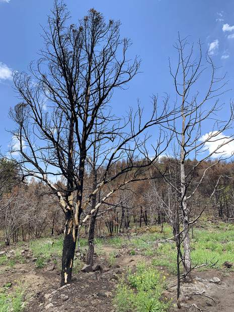 Areas of the Basalt State Wildlife Area were burned by the Lake Christine Fire in July 2018.