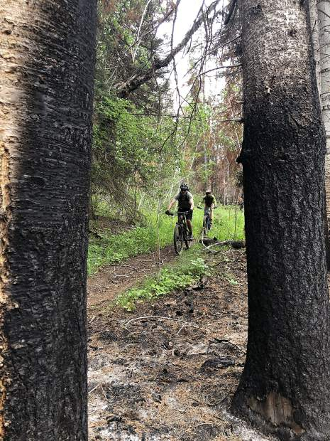 Cyclists on the Mill Creek Trail ride Friday through green grass framed by scorched tree trunks in the Lake Christine Fire burn scar.