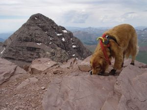 Colorado man shares advice for hiking with dogs after 14er journey with golden retriever