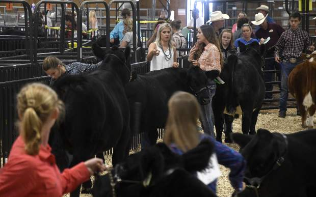The show ring thrives with activity as the showmanship judge talks with each showman individually during last year's 4-H at the Garfield County Fair.