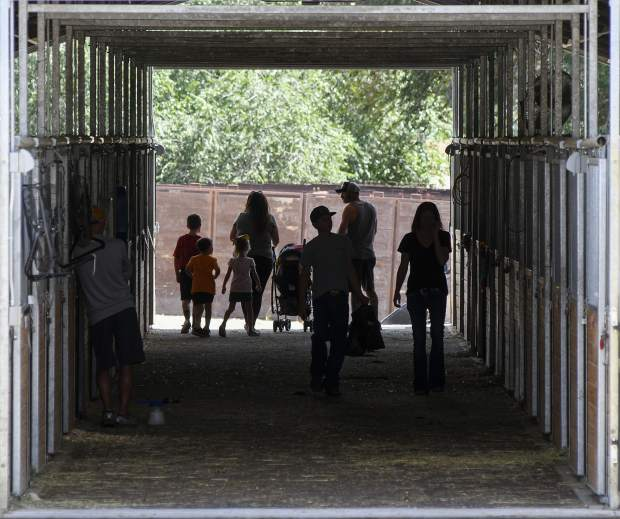 Activity picks up in the beef barn as 4-Hers tend to their animals Thursday at the fairgrounds.